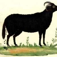 Keumaya - Black Goat Daughter [NSFW]