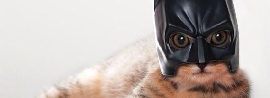 batman_gatto