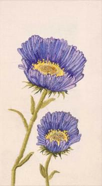 Dina-Rautenberg-Dinaeht-Herbstaster