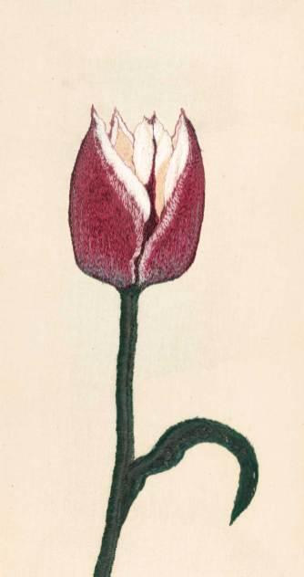 Dina-Rautenberg-Dinaeht--Tulpe