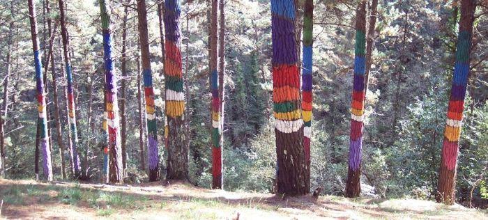 bosque-de-oma
