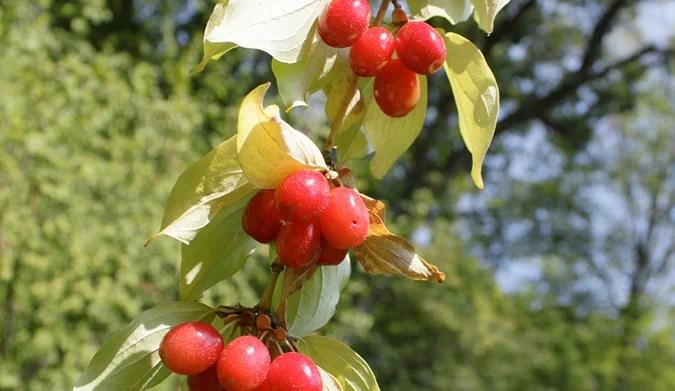 Alorea Krano ποικιλίας Ντούλια… Εξαιρετικά βιολογικά προϊόντα