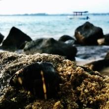 jungle beach rumassala