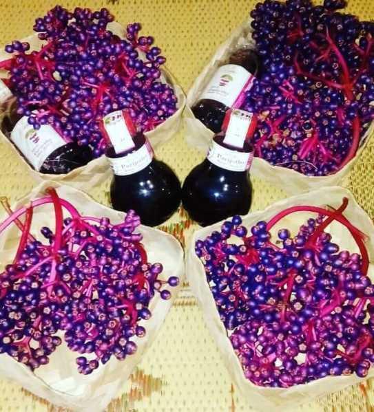 buah dan sirup parijoto alammu asli muria kudus