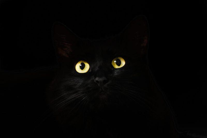 foto keren untuk profil whatsapp instagram telegram tiktok facebook line hewan lucu kucing hitam mata kuning menyala di kegelapan backgroung hitam polos