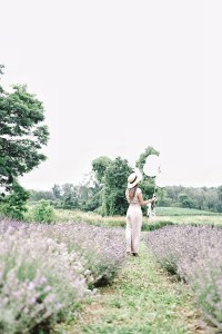 Such lovely Lavender at the lavender field