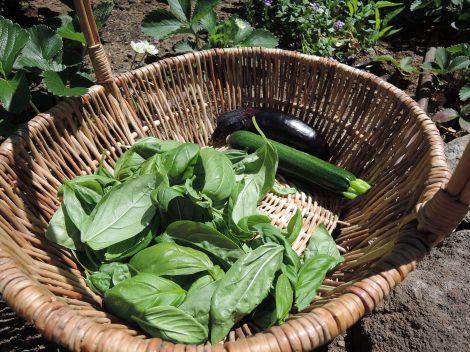 Garden fresh ingredients!