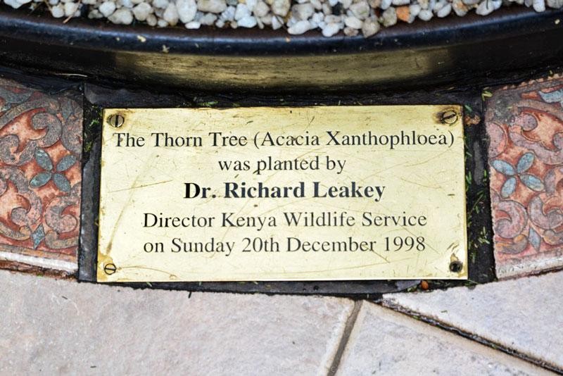 Sarova Stanley Thorn Tree