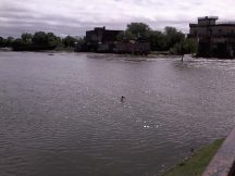 dinga-flood (4)