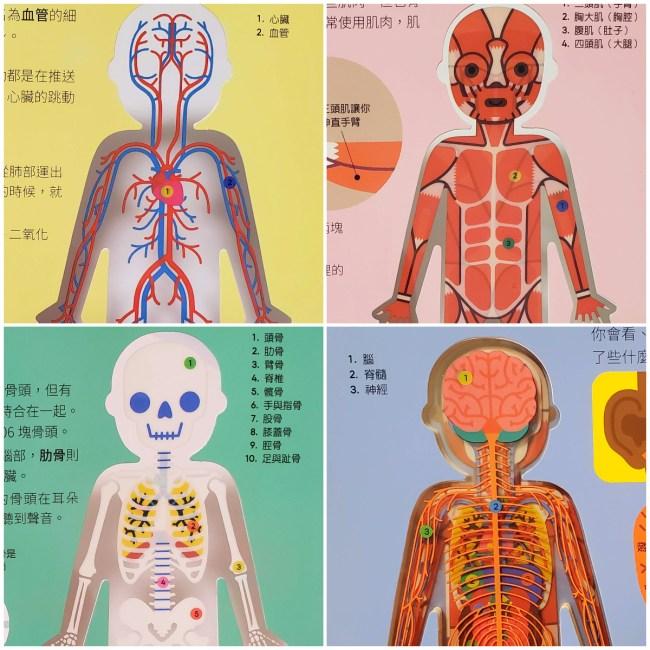 人體透視書