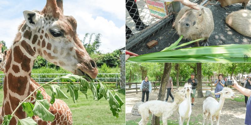 台南一日遊景點 | 學甲頑皮世界野生動物園,可以跟長頸鹿、水豚近距離餵食接觸,安排親子旅遊療癒一下吧!