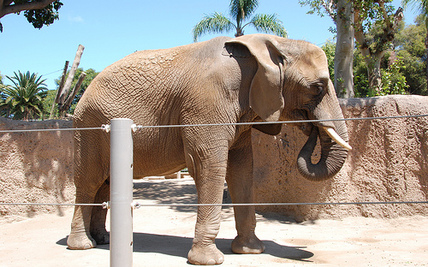 """Judge: Zoo """"Delusional"""" to Believe Its Elephants are Happy"""