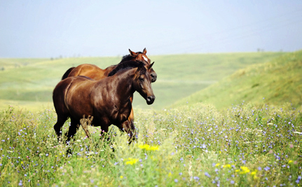 Horse Meat Will Stay Off of America's Dinner Tables for Now