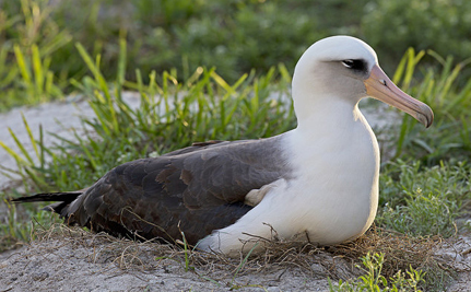 At 63, World's Oldest Known Bird Is Expecting Another Chick