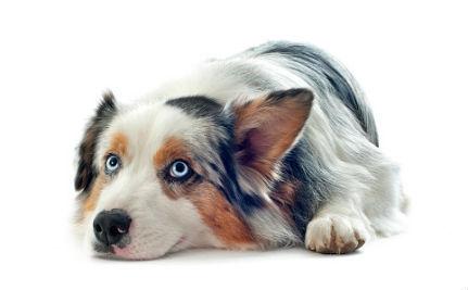 10 Amazing Deaf Pets