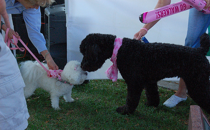 Dogs and Cats Can Get Breast Cancer, Too