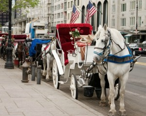 Horse-drawn carriages and city traffic are a bad combination.