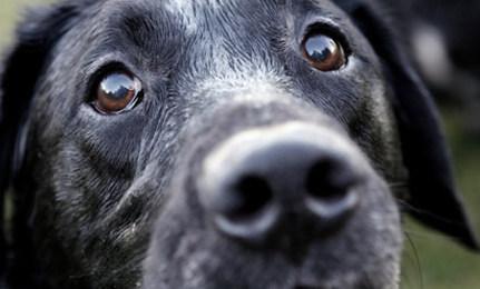 Dog Sniffs Out Cancer
