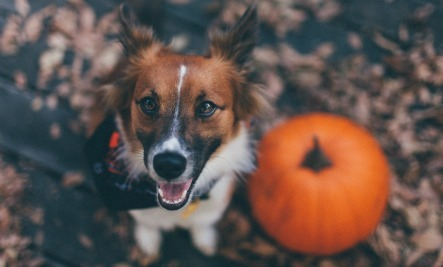 Top 3 Health Benefits of Pumpkin for Dogs and Cats