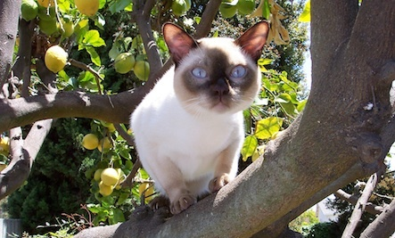 Holistic Cat Care Includes Natural Flea Prevention! (1/2)