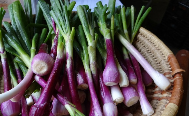 8 Great Benefits of Onions