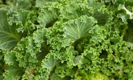 The 8 Most Nutrient-Dense Foods on Earth