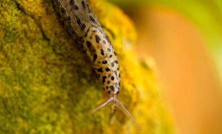16 Natural Ways To Defeat Garden Slugs