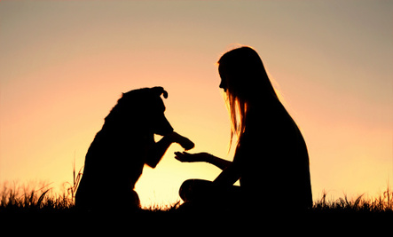 5 Signs of a Responsible Dog Owner
