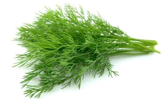 Resultado de imagen para dill herb