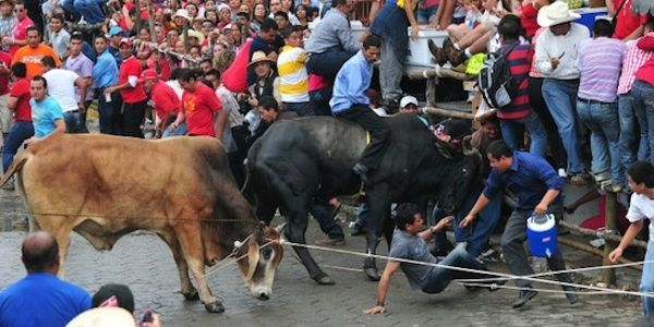 URGENT: Stop the February Bull-killing Event in Mexico!