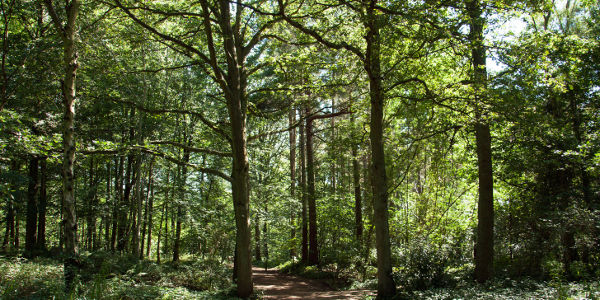 Stop the local council developing Houghton Forest, Whiteways