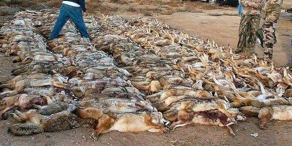 Nevada: It's Time to End Wildlife Killing Contests