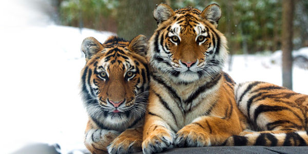https://i1.wp.com/dingo.care2.com/pictures/petition_images/petition/133/891818-1479512595-wide.jpg