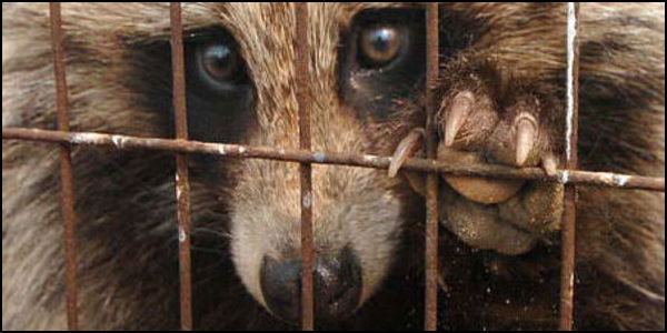 Tell the UK- Stop Importing Dog Fur Products