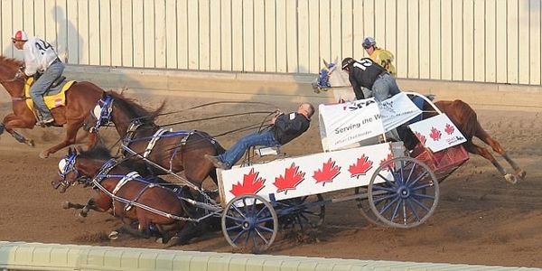STOP THE HORRIFIC CHUCKWAGON RACE & CALF ROPING EVENTS AT THE CALGARY STAMPEDE