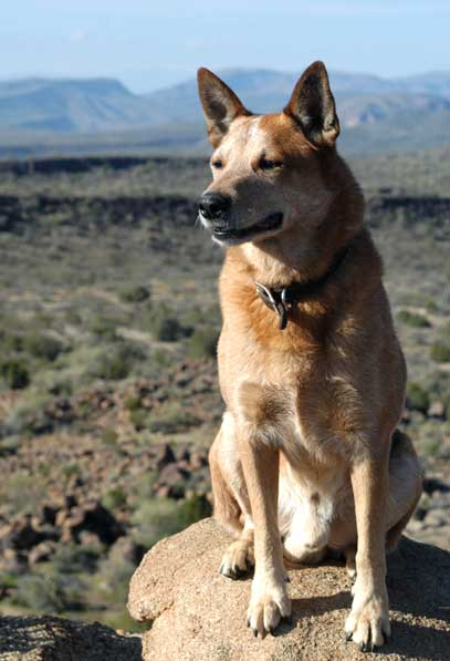 Dingo Surveying Arizona