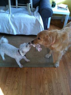 dingos doggy day care beverly ma