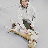 Lizzy dingos dogsitting beverly ma