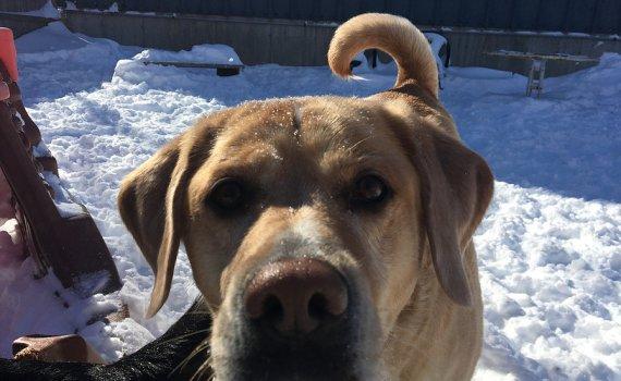 snow closing notice at dingos dogsitting service