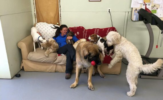dog daycare beverly ma