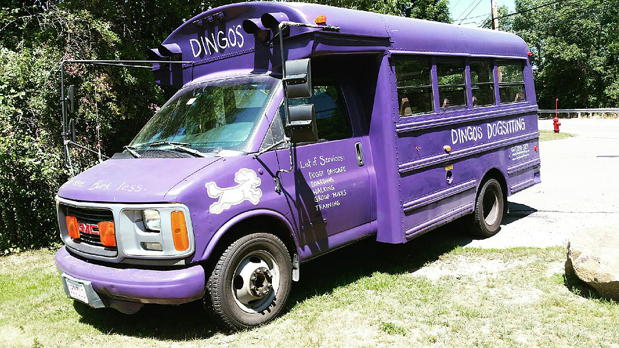 dog day care bus