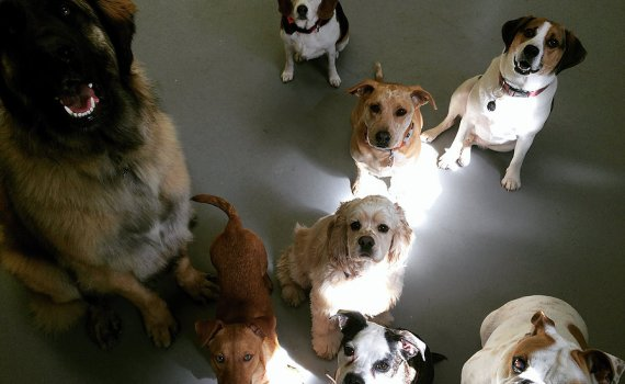 how doggy daycare is good for your dog