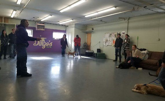 rocco group dog training class