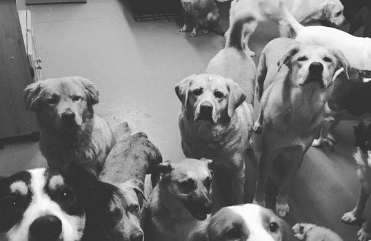 Dingos dogsitting service north shore ma