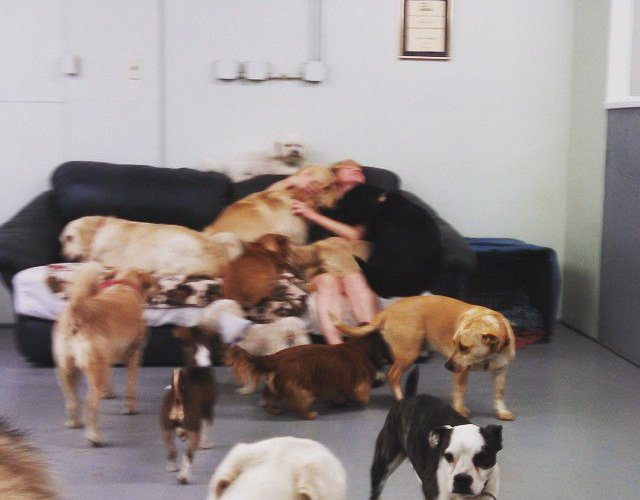 10 things I learned running a doggy daycare