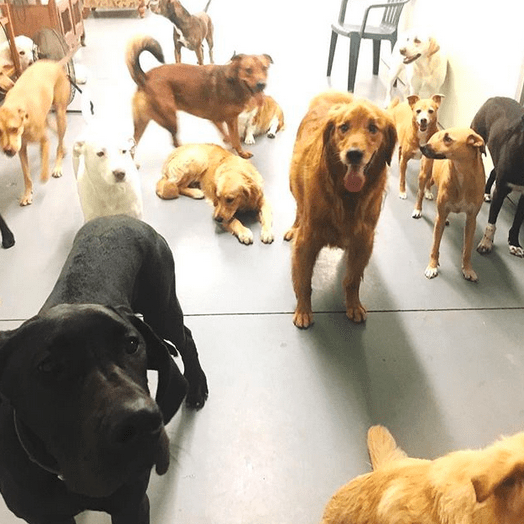 Dingo's pack.