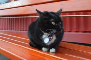 Cat red bench