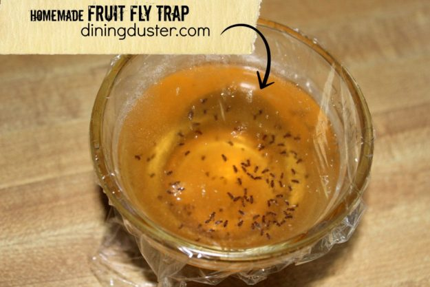 homemade fruit fly trap