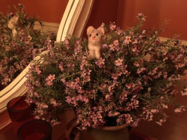 Frankie found a nice plant
