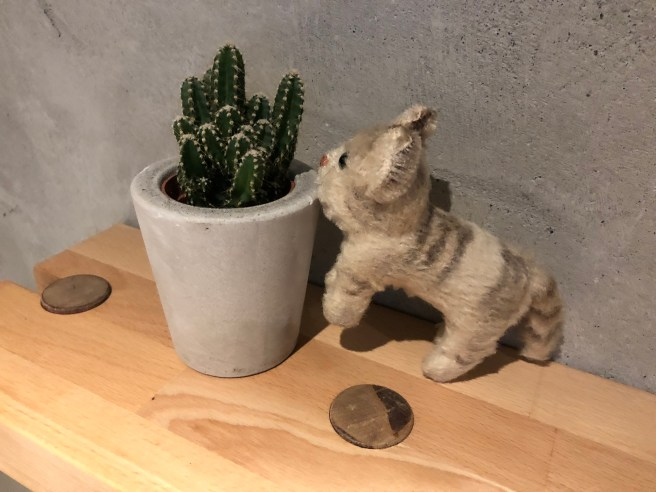 Frankie was careful around the cactus
